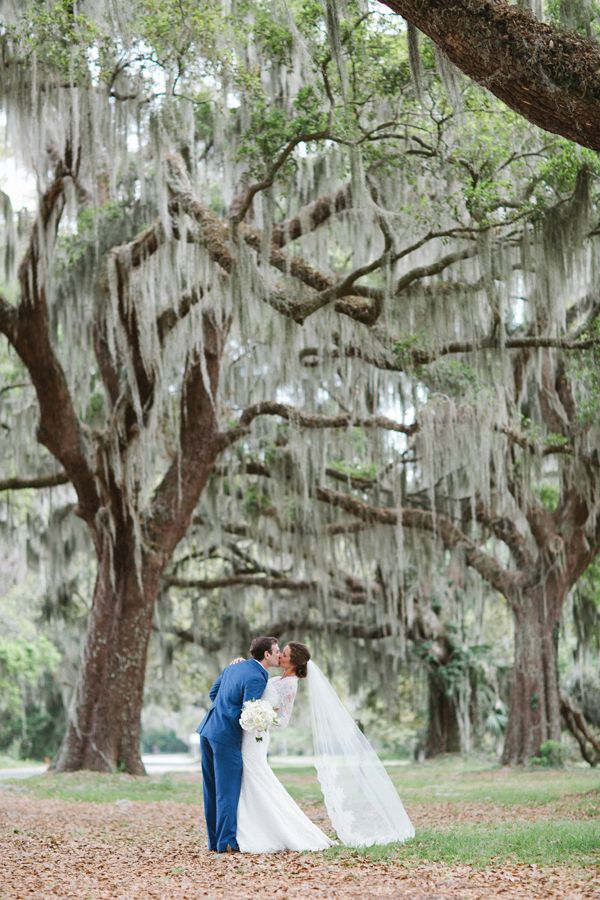 Best 25 Spanish Moss Ideas On Pinterest Creepy In
