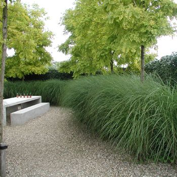 best 25 miscanthus sinensis gracillimus ideas on. Black Bedroom Furniture Sets. Home Design Ideas