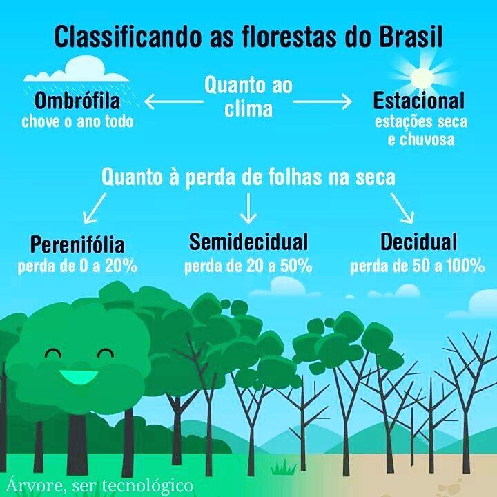 As Florestas do Brasil são as mais exuberantes do mundo! De forma geral, elas são classificadas principalmente pelo Clima e Estrutura Foliar. Deixe um comentário abaixo e diga se alguma delas ocorrem na sua região! Compartilhe para que seus amigos participem do post! Espero que gostem  #floresta #forest #mata #rainforest #interior #litoral #bio #biologia #biology #ensino #aprendizadem #ensinar #aprender #ciencias #engenharia #estudar #arvores #tree #preserve #conhecer #tropico #tropical #v