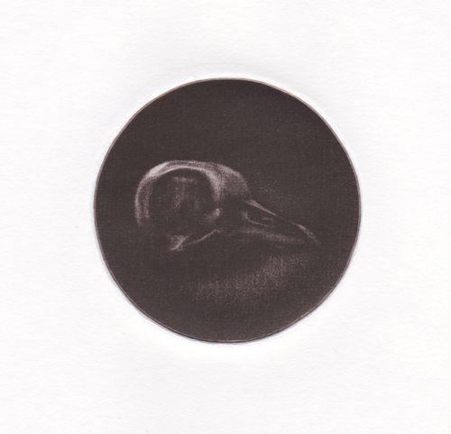 Darwin's Dovecot by GEORGIA PESKETT