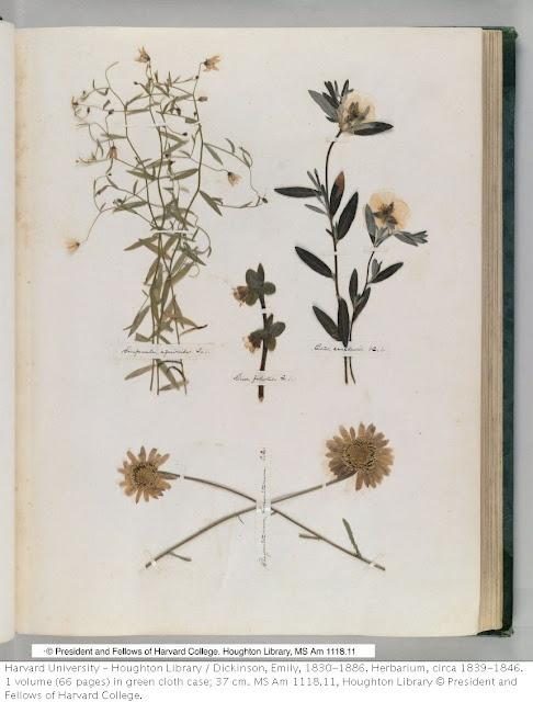 Emily Dickinson: Herbarium  L'erbario originale è conservato nella biblioteca dell'Università di Harvard