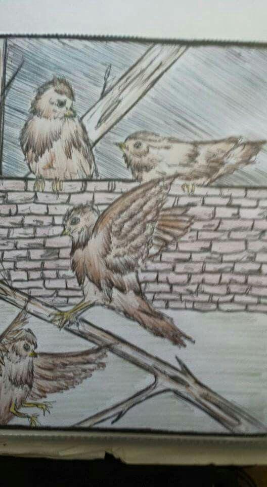 Little birds in flight doodle