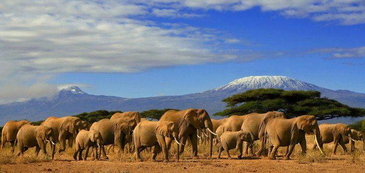 Kenya: Government allocates Ksh 1.4 billion to anti-poaching efforts http://goo.gl/Xk9GHd