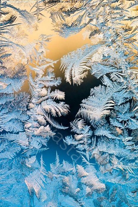 Jääkukat talviauringon valossa - jää jääkukka jääkukat lasissa ikkunalasissa lasi ikkunalasi auringonvalo valo jäätyminen jäätynyt kova pakkanen jäinen jäässä jäätynyt kuura kuurankukka kuurankukat kide ikkunaruutu kylmyys kylmä kuvio jääkuvio muoto huurre huurteessa talvi keskitalvi joulukuu
