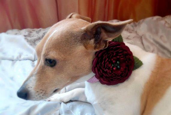 Dog collar flowerDog collarBrown Green dog collar by AirinFlowers #DogAcccessory #PetAccessory #DogClothes #kanzashi #PetSupplies #CollarFlower