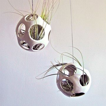 Pod Plant Holder with Air Plant
