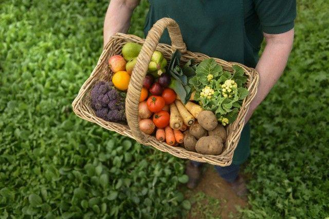 A medida que la demanda de productos orgánicos aumenta por moda, los productores capitalistas incurren en prácticas contrarias a la filosofía de cuidado ambiental.
