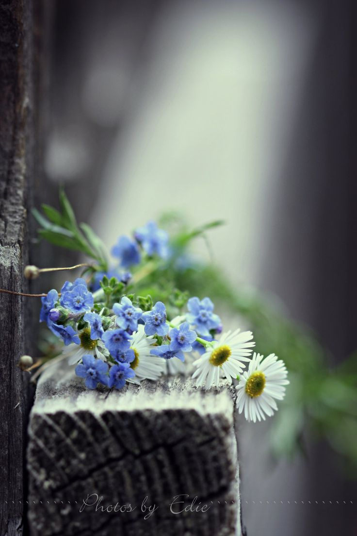 Forget Me Not by =1001G