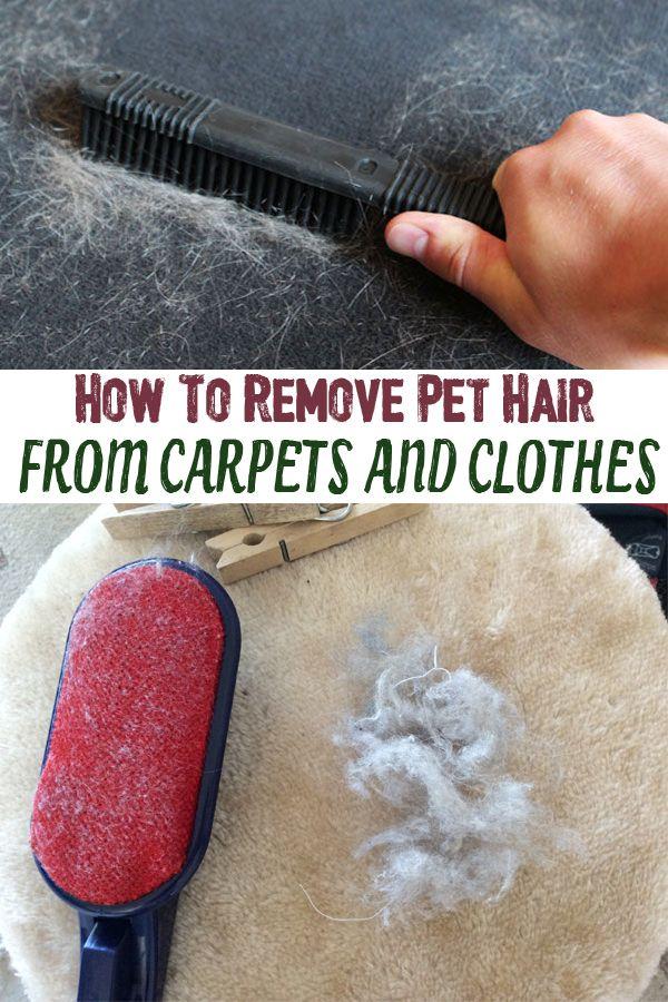 Best Remove Pet Hair ideas on Pinterest