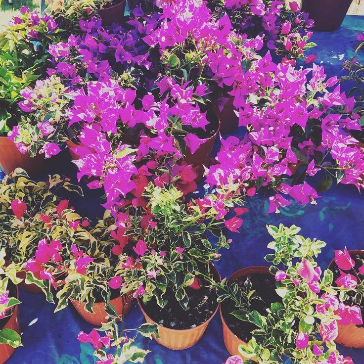 ������ #FVP2017 #festivaldelverdeedelpaesaggio #eventi #roma #natura #ecologia #ambiente #giardini #giardinaggiochepassione #giardino #architettura #design #agricoltura #verde #Auditorium #instacool  #instanature #instapeople #eventiroma #rome #romaeventi #plants #flowers #piante #fiori #greenery #greenworld #naturelovers #flowerslovers http://gelinshop.com/ipost/1522310212734922827/?code=BUgVRKsA7BL