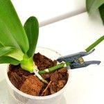 orchideát miként ültessük