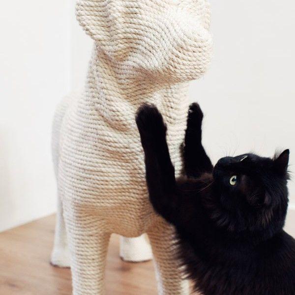 DOG-white-scratching cat-Soonsalon-photgraphy Masha Bakker