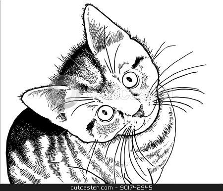18 best images about clip art for cakes on pinterest for Realistic cat coloring pages