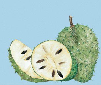 Guanábana. Acuarela para empaque de frutas congeladas