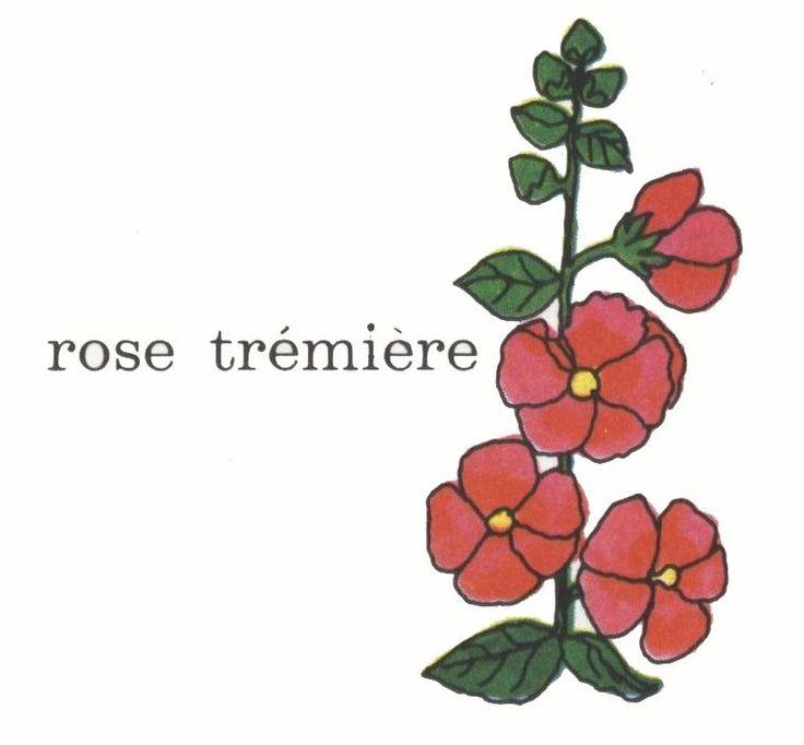 img/dessins de mots/rose-tremiere.jpg