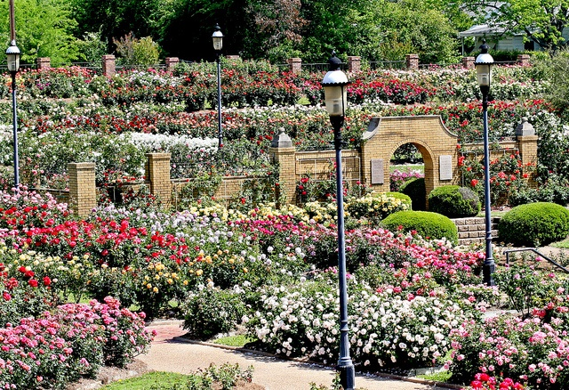 Roses In Garden: The Largest Municipal Rose Garden In America Is Located In