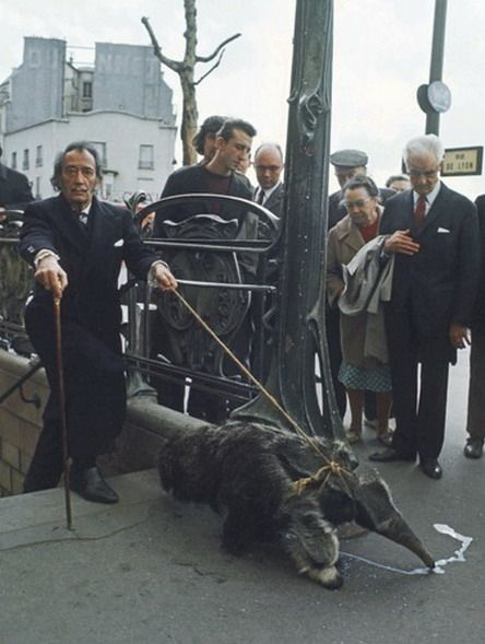 deepdey: Salvador Dali and his pet anteater. As you do. Yes, taking his pet for a casual walk.