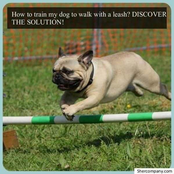 Ideas And Guide For Dog Training For Obedience Don T Let