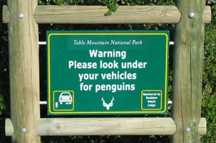 Planning a birding trip?  (Or any international trip, really) Here's a helpful list of travel info sites, regarding health, safety, etc.  Penguin warning sign - South Africa