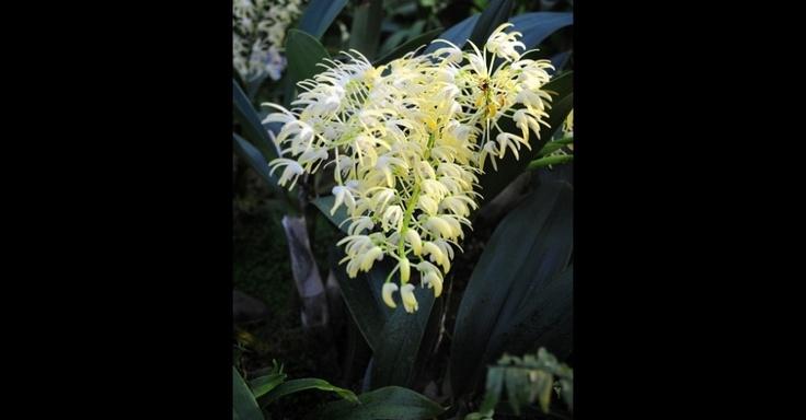 Jardim Botânico de Londres celebra beleza das orquídeas em festival - Fotos - UOL Meio Ambiente
