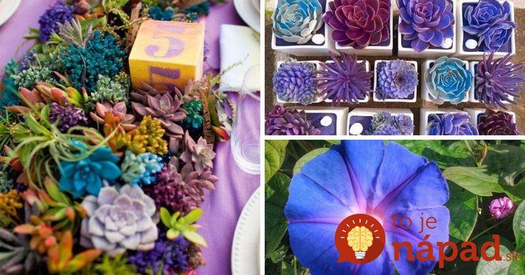 Jednoduchý trik, ako zmeniť farbu kvetov. Neváhajte a vyskúšajte to aj vy, táto metóda je pre rastliny neškodná.