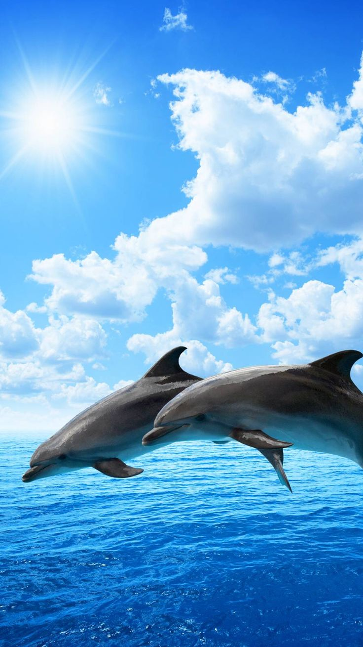 love dolphins. freedom.
