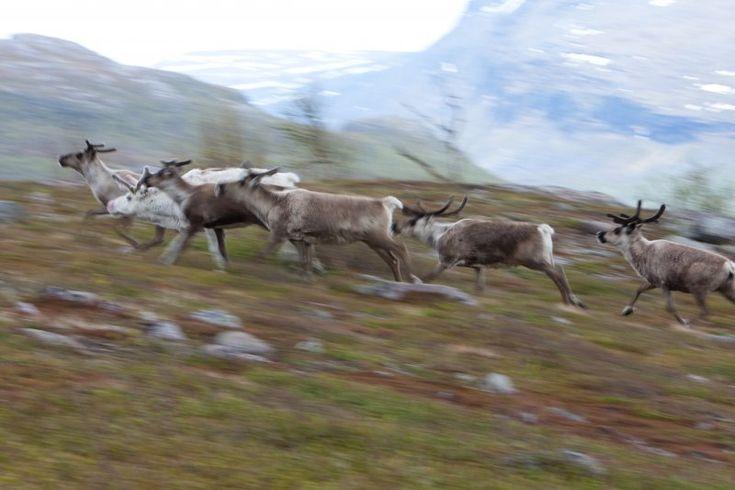 Kebnekaise (dalla lingua dei Sami Giebmegáisi o Giebnegáisi) è la più alta montagna della Svezia. Il massiccio, che fa parte delle montagne scandinave, ha due cime. Quella nella parte sud, quella ghiaccata, è la più alta, 2100 m s.l.m. (sopra il livello del mare). La cima a nord (2097 m s.l.m.), non è coperta da ghiacci. Il Kebnekaise si trova in Lapponia, circa 150 chilometri a nord del circolo polare artico e ad ovest del centro abitato di Kiruna, dove passa la linea ferroviaria che