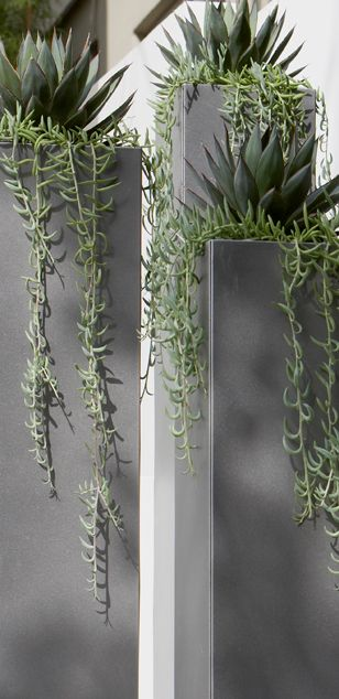 Agaves, tall grey modern planters