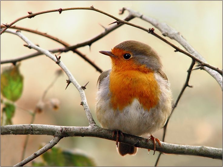 A little robin accompanies me on my walk around our moat as I lock up.