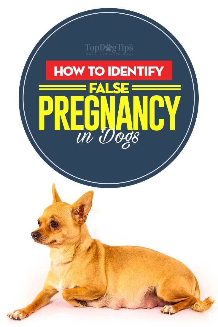 15 Best Dog Pregnancy Stages Images On Pinterest