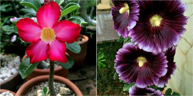 NATURALEZA TROPICAL nos vuelve a sorprender con un artículo completo y bonito sobre las mejores plantas para cultivar a pleno sol. ¡No os perdáis su página de Facebook!