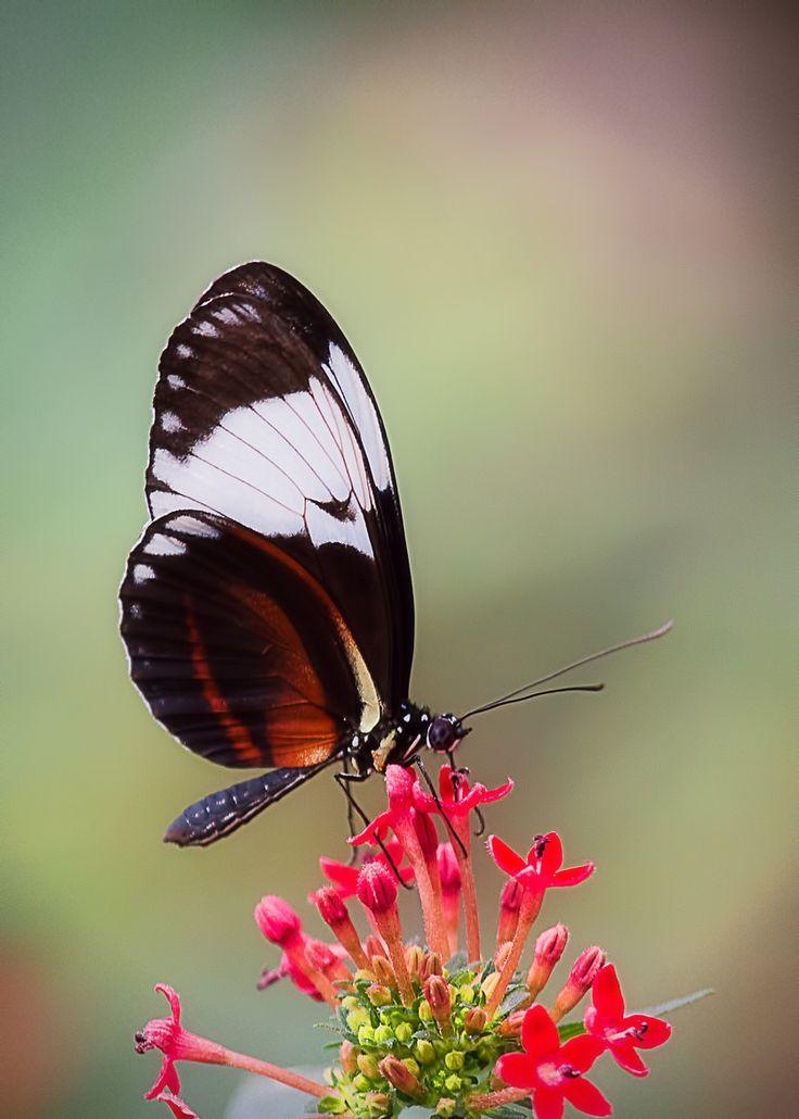 Metamorphosis: The Beauty & Design of Butterflies