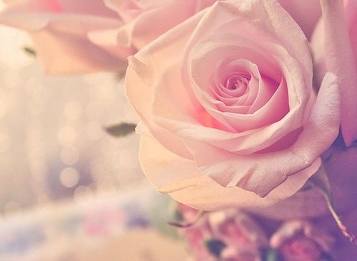 : Pink Flowers, Soft Pink, Inspiration Photos, Pretty Lights, Art, Pale Pink, Pink Cloud, Flowers Pictures, Pink Rose