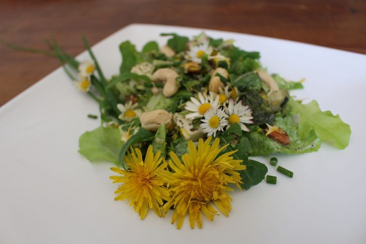 Paardenbloemen eten, kan dat? Paardenbloementhee of paardenbloemen door je salade: vrolijk, lekker, goed voor je gezondheid en ook nog eens gratis!