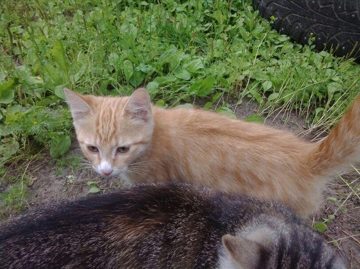 Kissa3