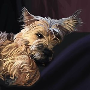 Top Cairn Terrier Ball Adorable Dog - 72948fcbbee2f70ccc88459da5729e42--painting-art-paintings  Snapshot_43848  .jpg