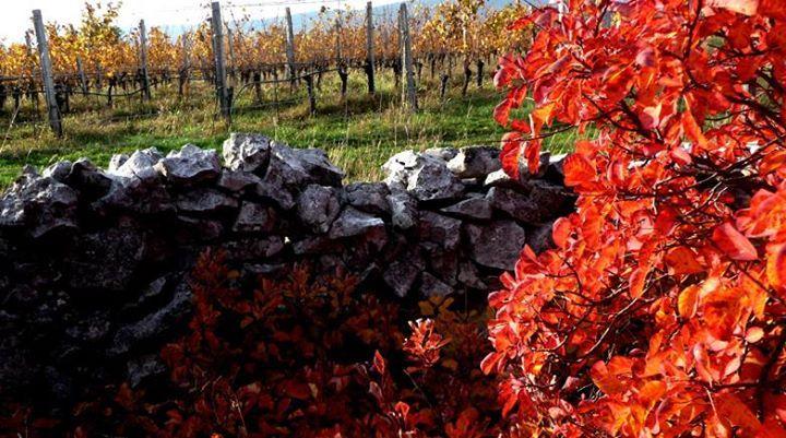 Sentire scorrere l'Isonzo, (...) i paesi della Grande Guerra. La grande consolazione che ora qui scorra vino e non più sangue.Il Carso secondo LaCapraEnoica