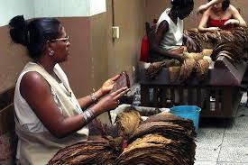 Картинки по запросу cuban cigars prices