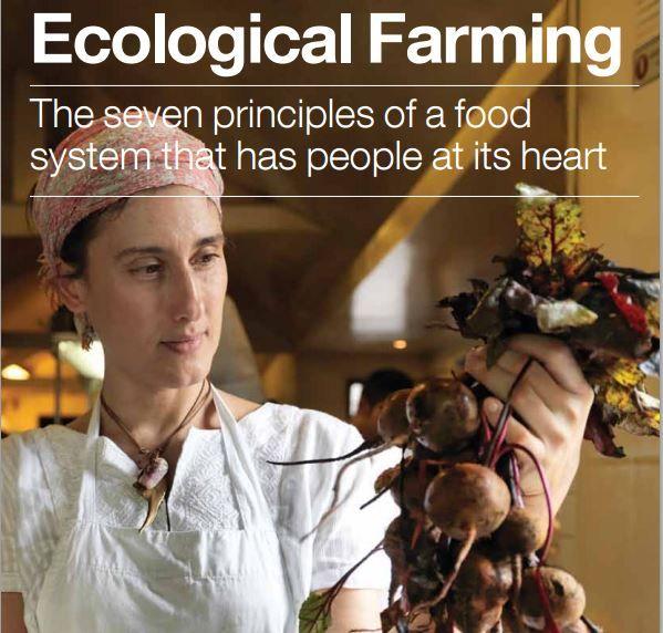 Agricoltura sostenibile del futuro: le 7 proposte di Greenpeace
