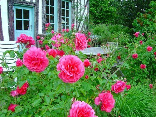 designing a beautiful flower garden - Flower Garden Ideas With Roses