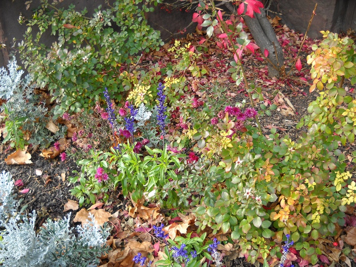 """By Nikki Phipps (Author of The Bulb-o-licious Garden) Numerous plants bloom throughoutthe autumn season. Fall flower gardens not only provide appealing blooms but they also add additional color and interest to the landscape. Let's answer the question of """"what do I plant in a fall garden?"""" What Do I Plant in a Fall Garden? There…"""