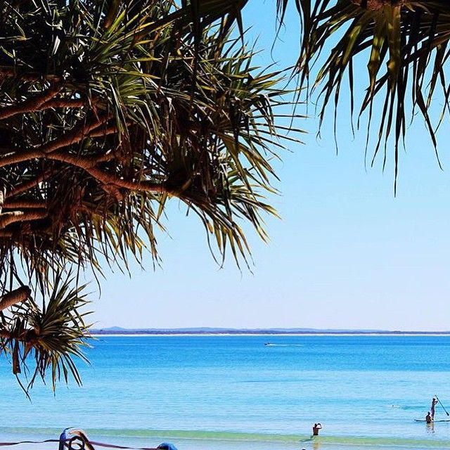 Peeking through the pandanus to the beautiful blues of Noosa's Main Beach! One of the few beaches along Australia's coastline that faces North, this beach is the best option for families or those not confident in the surf, as it has gentle waves and is patrolled by surf lifesavers!