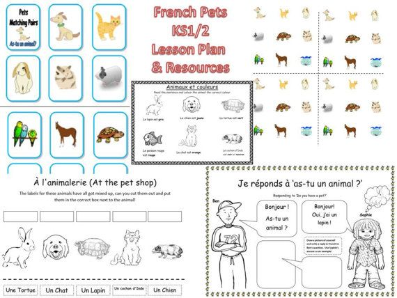 French Pets Lesson and Resources KS1/2 by FrenchResourcesByJo
