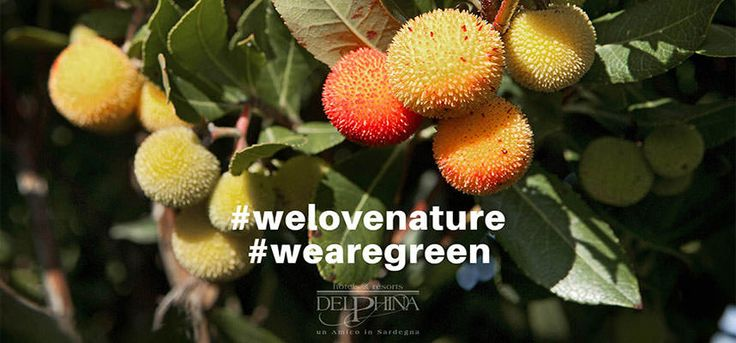 Delphina is the first Italian hotel chain to use #energy from #renewable sources in all its structures.#eco #friendly #holidays in #Sardinia #hotel #italy #resort #green