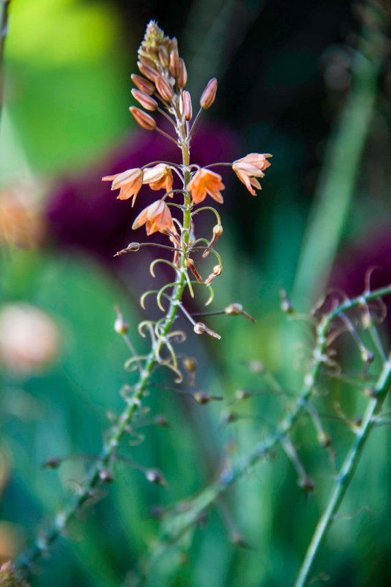 Little Orange Flower Delicate Subtle Flower by garcisssa on Etsy, $10.00