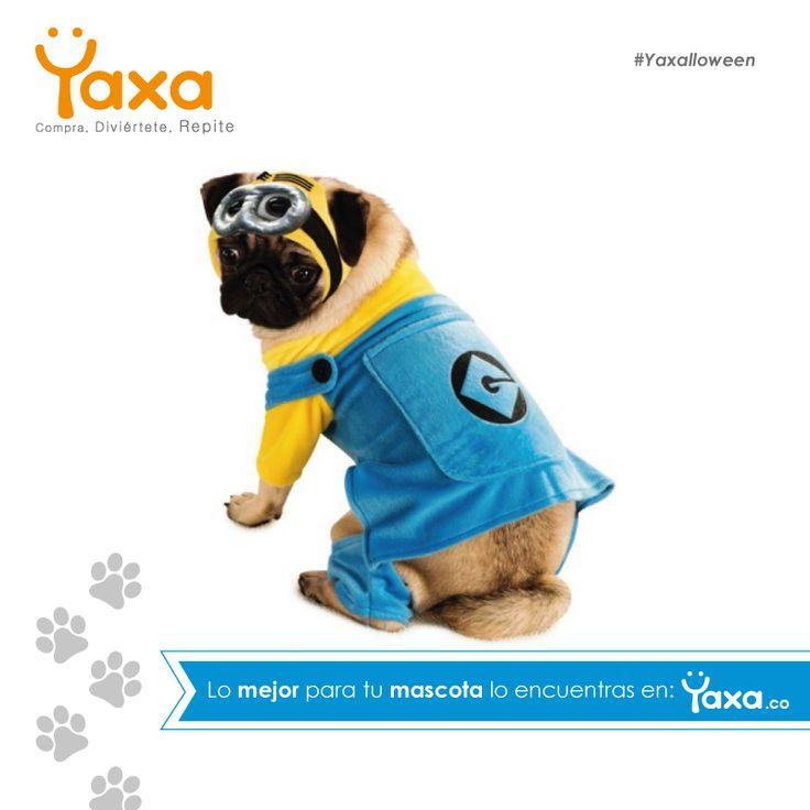 En Yaxa.co: Compra, Diviértete, Repite. Tu mejor amigo también merece el mejor disfraz de Halloween, ingresa a: https://goo.gl/wqD3N1, y encuentra la mejor opción. #YoAmoaMiMascota, #Yaxa #YaxaGuau