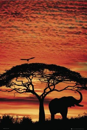 African sunset, personal dream to see this for real