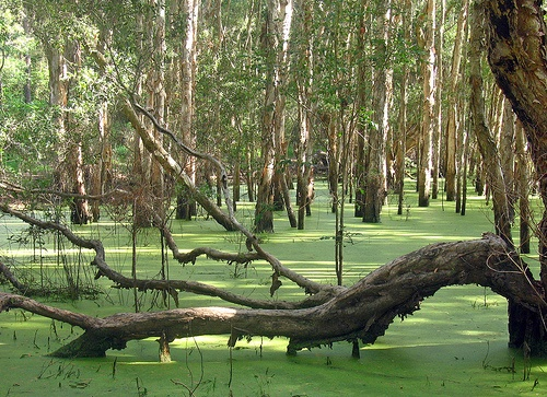 Dudley Lagoon in the Awabakal reserve. If you are very quiet you may meet a platypus.
