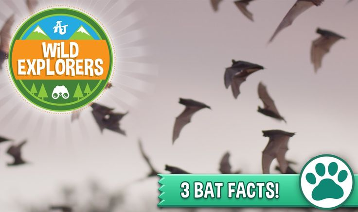 We are having so much fun celebrating #batweek with Bat Conservation International that we made another awesome bat video. Keep learning about bats and #playwild