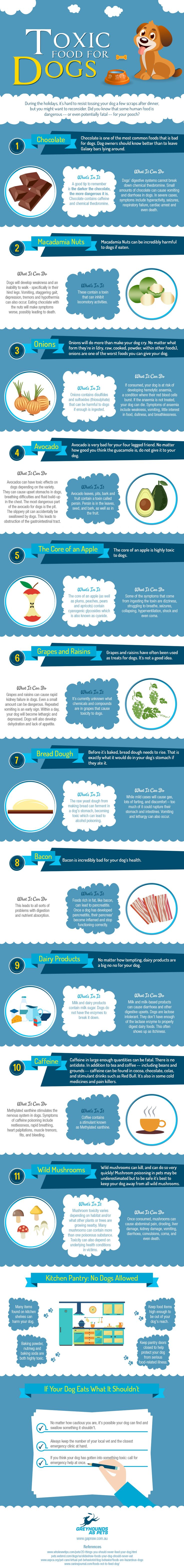 Toxic Foods for Your Dogs [Infographic]   Animal Bliss